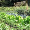 growing organic food