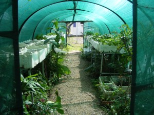 Nursery tunnel