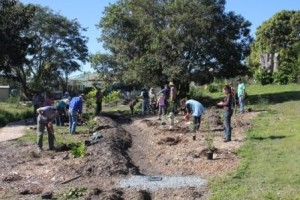 Planting the Subtropical Food Forest - July 2012