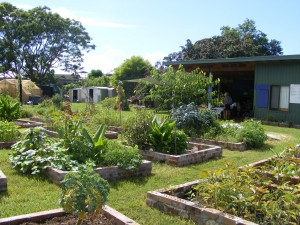 Coffs Regional Community Gardens 2015