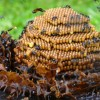 Native bee hive